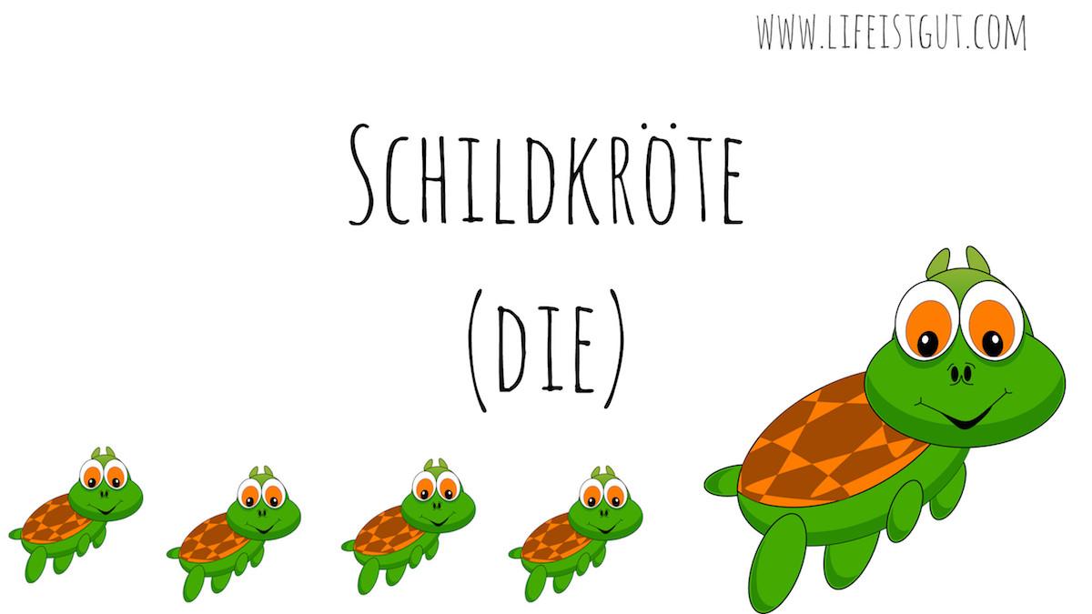die Schildkrote - дословно «жаба со щитом» ничто иное как обыкновенная черепаха.